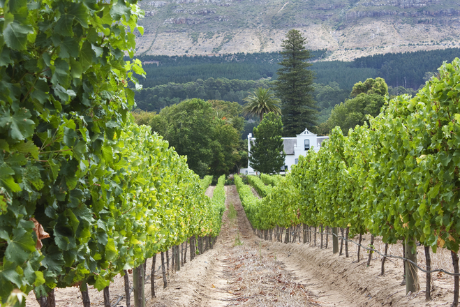 South African Grape Region