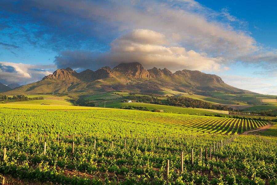 South African Grape Region vineyard